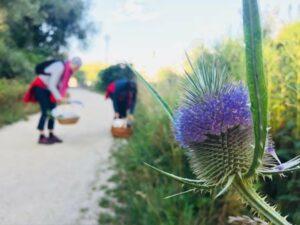 Kräuterwanderung in Tulln